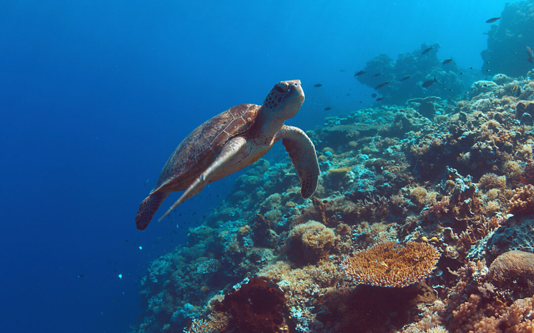 Sustainable Development Goal 14: Conserve the Oceans and Protect Marine Life